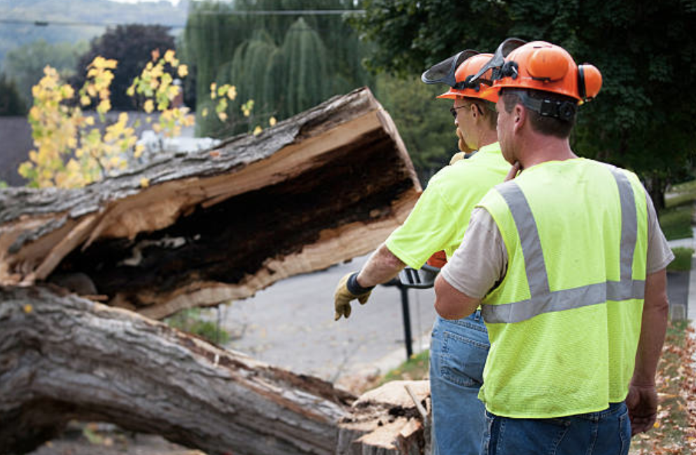 two arborists in emergency jackets checking out fallen tree in Tuscaloosa AL